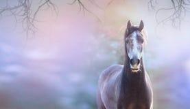 Hästen på blått fjädrar bakgrund, banret för website Arkivfoto