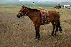 Hästen på en sommar betar i Mongoliet Fotografering för Bildbyråer