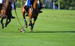 Hästen Polo Player skyddar en poloboll fotografering för bildbyråer