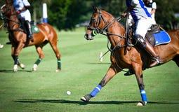 Hästen Polo Player spelar i match royaltyfri fotografi