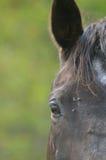 Hästen sätter in in Royaltyfria Bilder