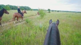 Hästen som nästan går gruppen av ryttare på hästryggridning på fältet stock video