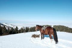 Hästen står i snön mot bakgrunden av berg royaltyfria foton