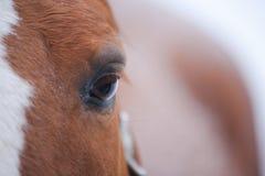 Hästen synar closeupen fotografering för bildbyråer