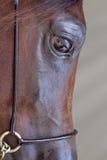 Hästen vänder mot Royaltyfria Bilder