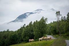 Hästfält Fotografering för Bildbyråer