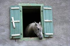 Hästfönster Fotografering för Bildbyråer