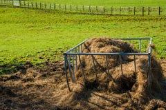 Hästförlagematare Royaltyfri Bild