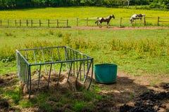 Hästförlagematare Arkivbild