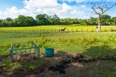 Hästförlagematare Fotografering för Bildbyråer