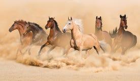 Hästflock Fotografering för Bildbyråer