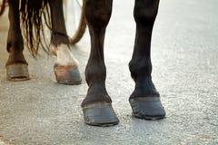 Hästfoten med traskar och hästskor mot hjulen av cet arkivfoto
