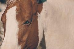 Hästframsidacloseup på västra lantgård fotografering för bildbyråer
