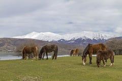 Hästfrihet i Abruzzo Royaltyfri Bild
