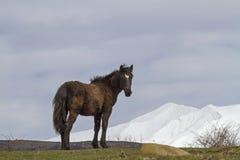 Hästfrihet i Abruzzo Royaltyfria Bilder