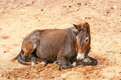 hästgalopper Royaltyfria Foton