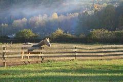 hästgräns Royaltyfri Bild