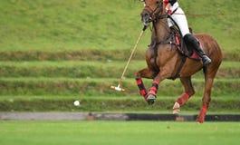 Hästhastighet i en polo arkivbilder