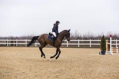 Hästhinderkurs och parkour Royaltyfria Foton