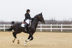 Hästhinderkurs och parkour Arkivfoton