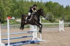 hästhopp min portfölj som ska välkomnas Royaltyfri Foto