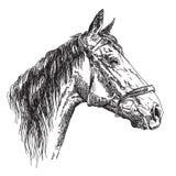 Hästhuvud i profil med illustratio för teckning för tygelvektorhand Arkivfoto