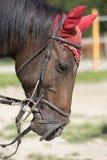Hästhuvud med det röda skyddslocket Fotografering för Bildbyråer