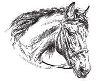Hästhuvud med illustrationen för teckning för tygelvektorhand Royaltyfria Bilder