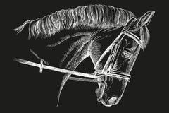 Hästhuvud med tygeln Royaltyfria Foton