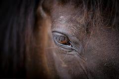 Hästhuvud - närbild av ögat Royaltyfria Bilder