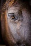 Hästhuvud - närbild av ögat Arkivbild