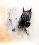 Hästhuvud, två svartvita hästandar, härlig detalj Royaltyfri Foto