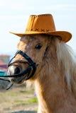 Hästintresserad ponny Royaltyfria Bilder