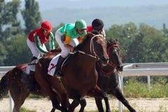 hästkapplöpning Arkivbild