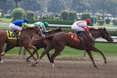 hästkapplöpning 1s 6514 Royaltyfri Fotografi