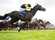 Hästkapplöpning arkivfoton