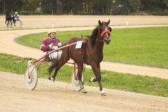 hästkapplöpning arkivfoto