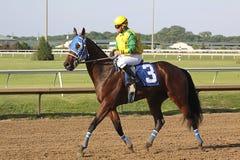 hästkapplöpning Royaltyfria Foton