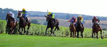 Hästkapplöpning 2013b Arkivbilder