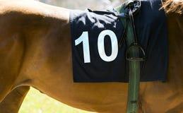 Hästkapplöpning brun häst med nummer 10 Fotografering för Bildbyråer