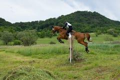 Hästkapplöpning för argt land Royaltyfri Foto
