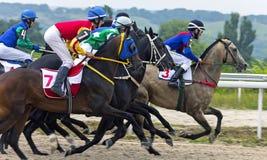 Hästkapplöpning för priset av Absentaen i Pyatigorsk Arkivbilder
