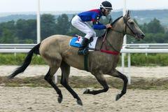 Hästkapplöpning för priset av Absentaen i Pyatigorsk Royaltyfria Foton