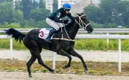 Hästkapplöpning för priset av Absentaen i Pyatigorsk Fotografering för Bildbyråer