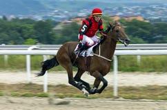 Hästkapplöpning för priset av det toppet sprintar i Pyatigorsk Royaltyfri Fotografi
