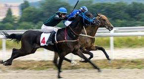 Hästkapplöpning för priset av det toppet sprintar i Pyatigorsk Arkivfoto