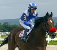 Hästkapplöpning för priset av Ogranichitelnien arkivbild
