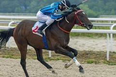 Hästkapplöpning för priset av Ogranichitelnien i Pyatigorsk Royaltyfri Fotografi