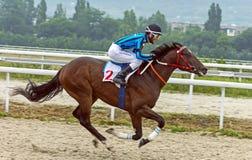 Hästkapplöpning för priset av Ogranichitelnien i Pyatigorsk Royaltyfri Foto