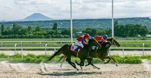 Hästkapplöpning för priset av stort sprintar i Pyatigorsk royaltyfri fotografi
